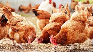 EBRD supports Ukraine's Dniprovska Agri Group