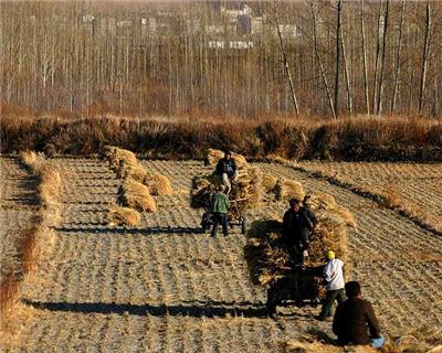 Is Cofco set to break open the agri market?