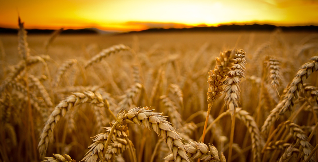 Olam: Revamping and showing resilience