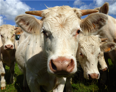 Livestock – more than a commodity