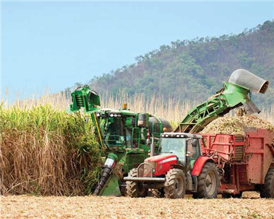 Biosev: ING stirs a sweet deal for the Brazilian sugar processor