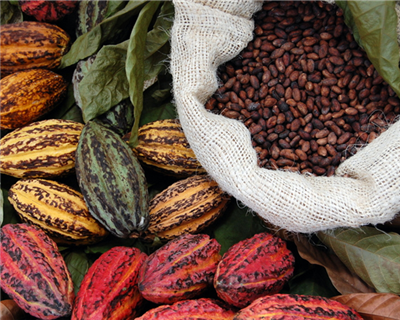 Cocobod's success stands as an example for other African nations