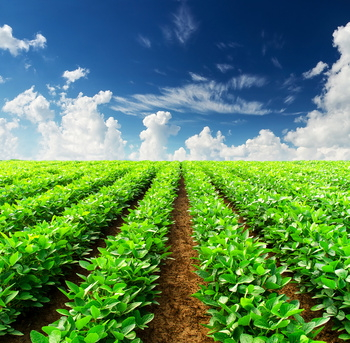 Ecobank and eleni team to strengthen African agri-financing