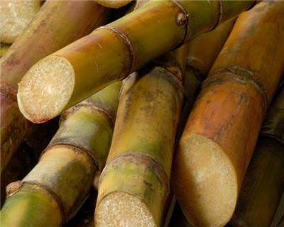 Brazil's BBM gets IFC funding for agri-sector lending