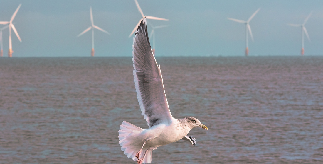 Japan's fledgling offshore wind sector takes flight