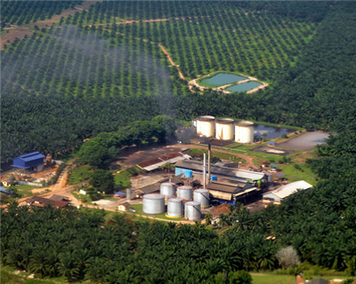 Cargill and Bunge go against the tide on sustainable palm oil