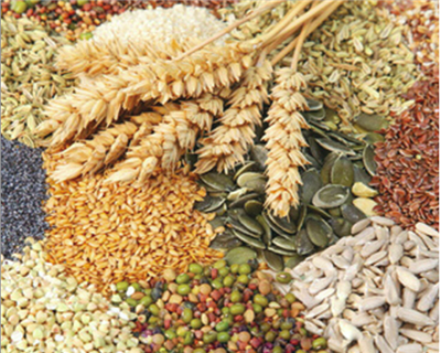 China moves into fast lane to secure agri-trading assets