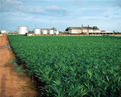 IFC loan backs Olam's Nigerian and Indian projects