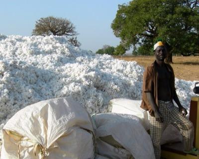 Sofitex raises $224 million for cotton exports