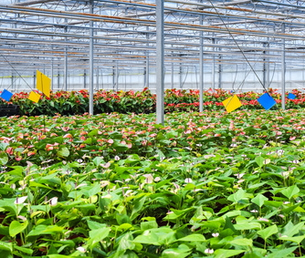 DEG finances German-Kenyan horticultural expansion