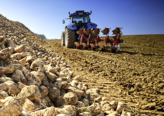 EBRD loan for Ukrainian sugar beet producer
