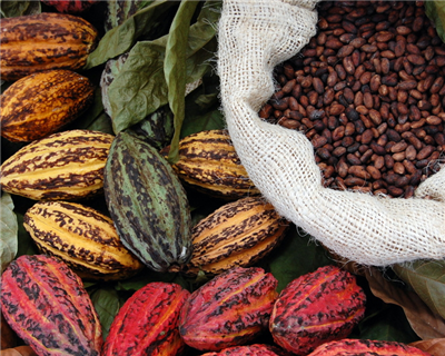 Cargill and IFC team for Cote d'Ivoire cocoa programme