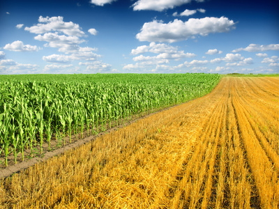 Olam signs five-year loan for Australian agri subsidiaries