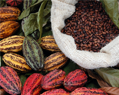 Ghana Cocoa Board formally signs annual pre-export financing for $1.8 billion