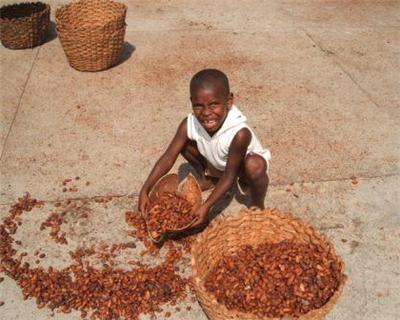 Côte d'Ivoire's SAF-Cacao seals $25m PXF amid cocoa demand boom